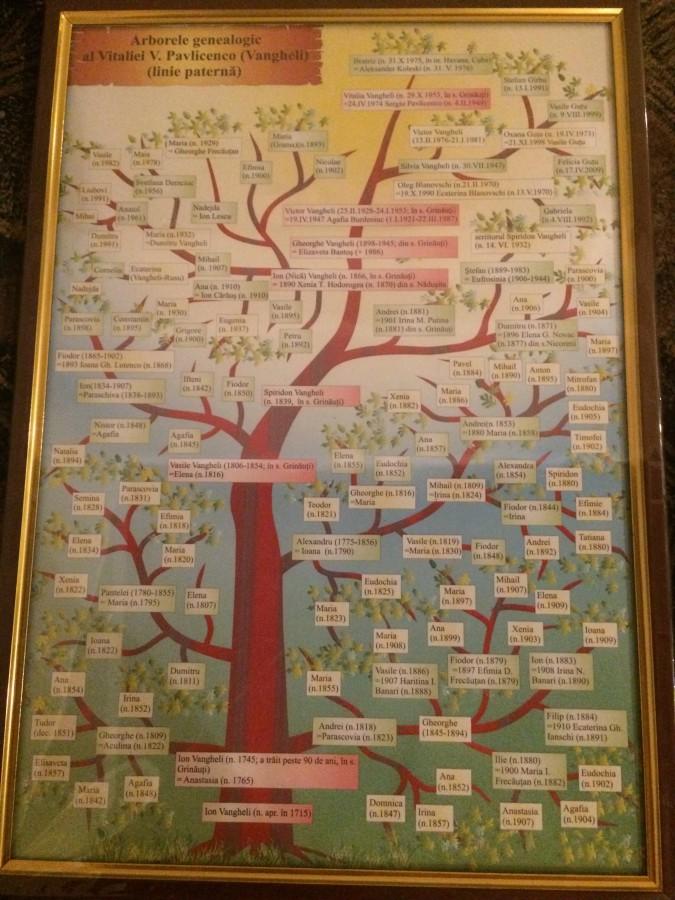 arborele genealogic vitalia pavlicenco